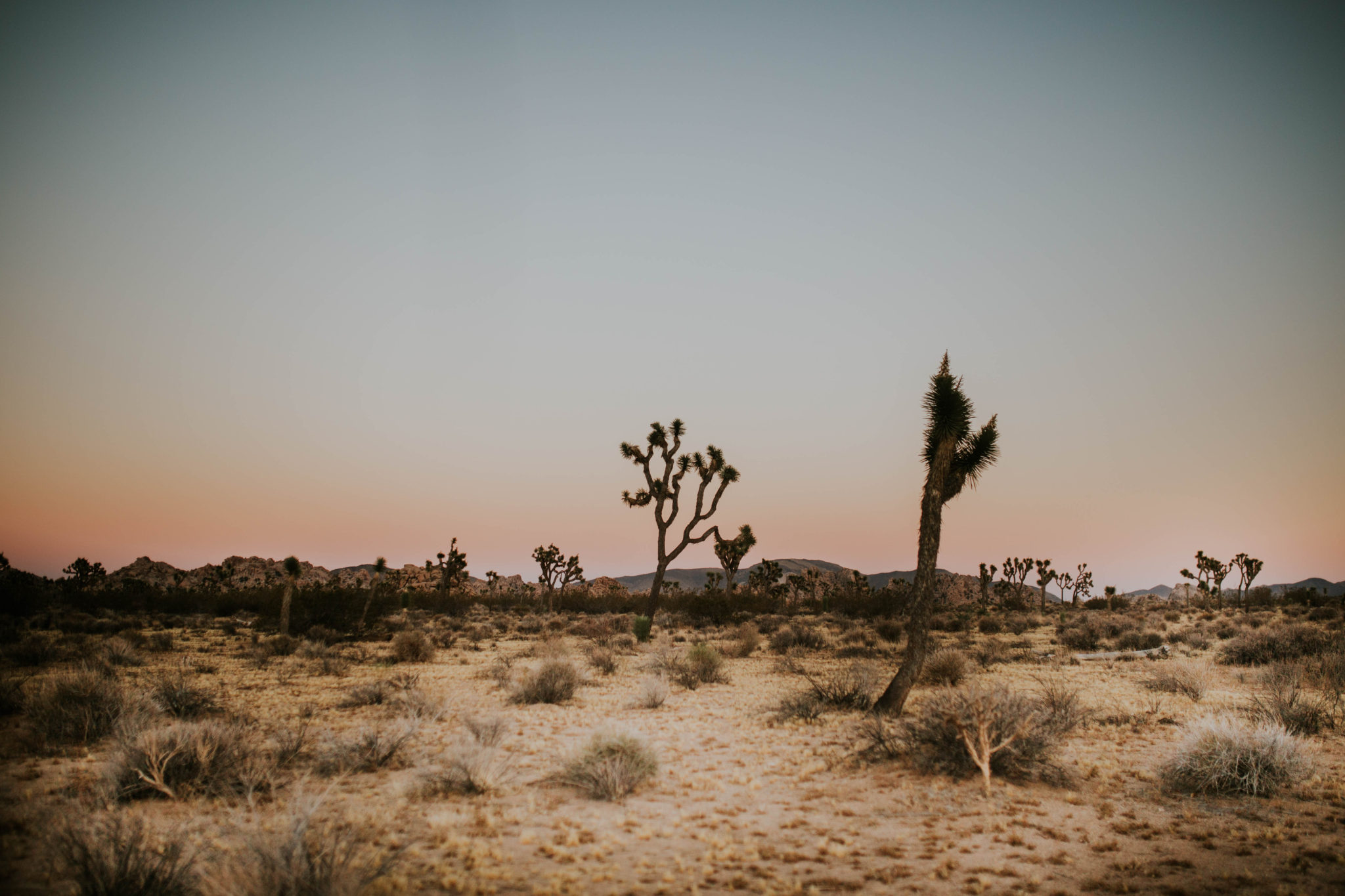 Mandy & Joey Joshua Tree Elopement California Wedding Photographer-297